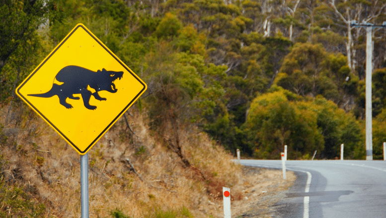 Warning Sign for Tasmanian Devil. These nocturnal animals feed on the carcasses of dead animals. Many are found on roadways, and consequently many are killed by cars.
